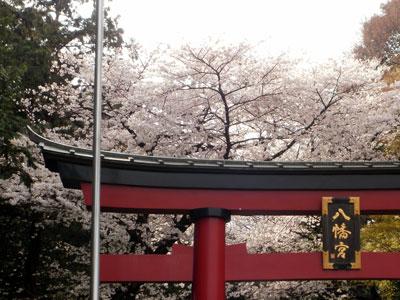 大宮八幡桜まつり002