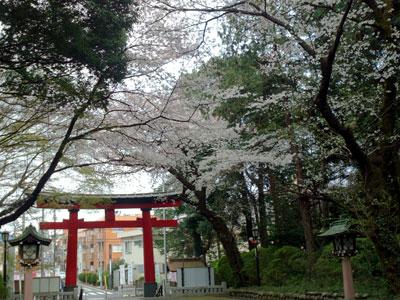 大宮八幡桜まつり003