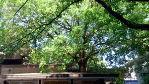 乃木神社4