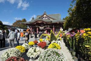 笠間稲荷神社菊